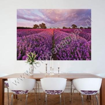 Muurposter Lavendel