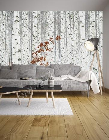Fotobehang White Birch Forest