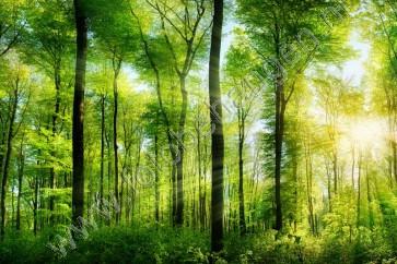 Vlies fotobehang Zonnestralen in het bos