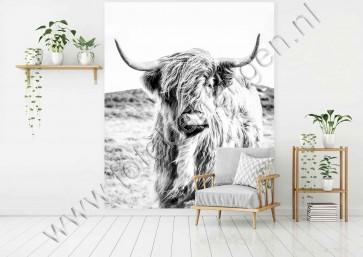 Fotobehang Schotse hooglander