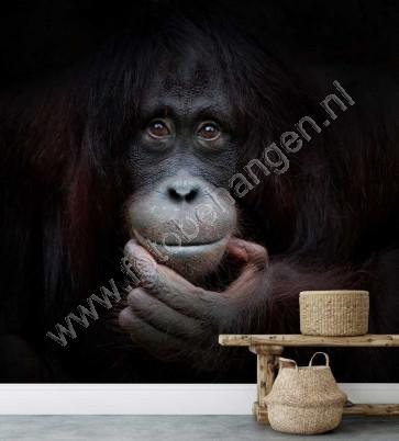 fotobehang Chimpansee