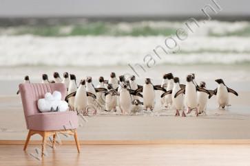 Vlies fotobehang Pinguïns