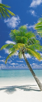 deurposter met palmboom