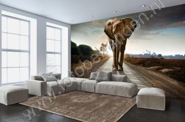 Vlies fotobehang Lopende Olifant