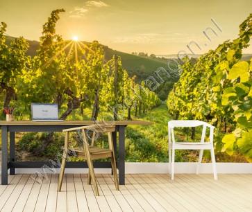 Vlies fotobehang Wijnveld bij zonopkomst