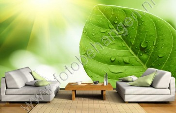 Vlies fotobehang Regendruppels op groen blad