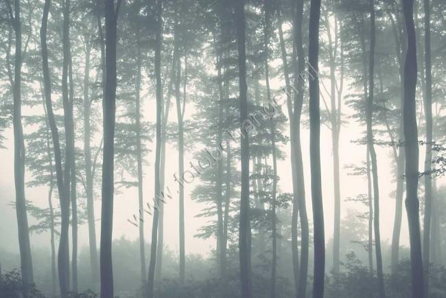 Populair Vlies fotobehang Bomen in mistig bos | Fotobehangen.nl @BL27