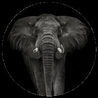 Behangcirkel Olifant zwart wit