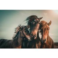 Vlies fotobehang Paarden familie