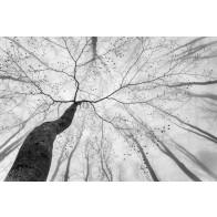 Vlies fotobehang Lenteboom