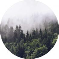 Behangcirkel Bos in de mist