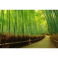 Vlies fotobehang Laan in bamboebos