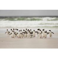 Vlies fotobehang Penguins