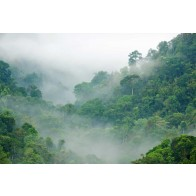 Vlies fotobehang Regenwoud in de mist