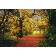 Fotobehang Autumn Forest