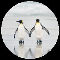 Behangcirkel Pinguin stel