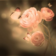 Vlies fotobehang Roze rozen