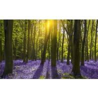 Vlies fotobehang Wilde hyacinten in het bos