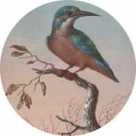 Behangcirkel IJsvogel