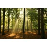 Vlies fotobehang Bomen in het ochtendlicht
