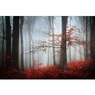Vlies fotobehang Mistige herfstdag in het bos