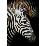 Vlies fotobehang Zebra