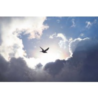 Vlies fotobehang Vogel in de wolken