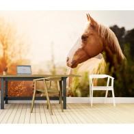 Vlies fotobehang Paard in het veld