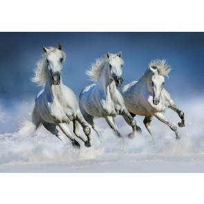 Fotobehang Arabian Horses