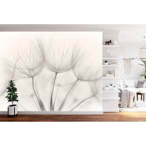fotobehang Dandelions zwart en wit