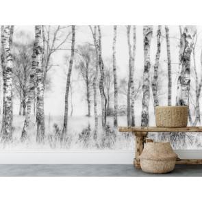 Vlies fotobehang Berkenbos zwart en wit