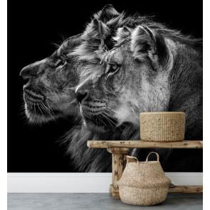 fotobehang Leeuw en leeuwin