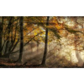 Vlies fotobehang Licht in het bos