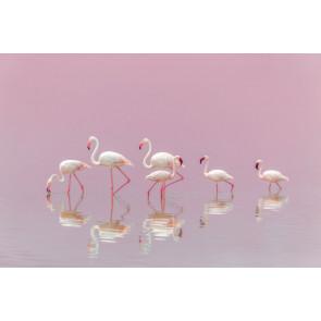 Vlies fotobehang Flamingo