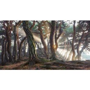 Vlies fotobehang Woodland