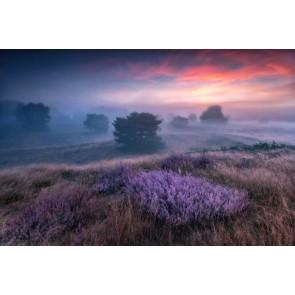 Vlies fotobehang Heide