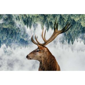 Vlies fotobehang Hert in het bos