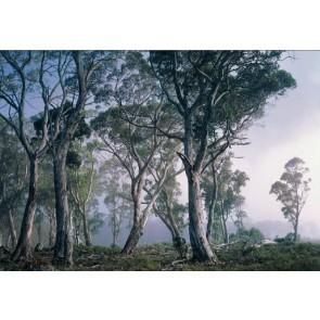 Fotobehang Fantasy Forest