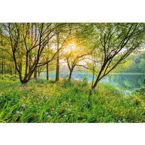 Fotobehang Spring lake