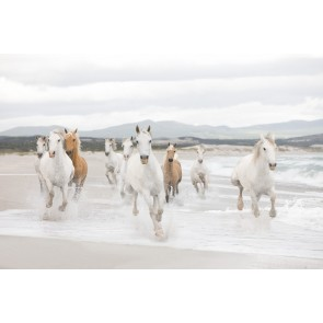 Fotobehang White Horses