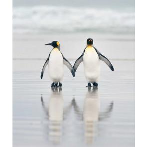 Vlies fotobehang Pinguin stel