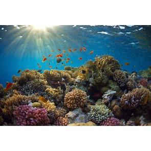 Vlies fotobehang Onderwaterwereld