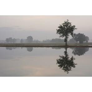 Vlies fotobehang Bomen bij zonsopkomst