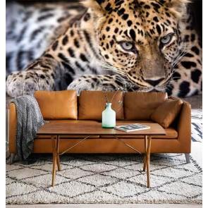 Fotobehang Luipaard