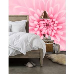 roze chrysant