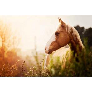 Vliesbehang paard in het veld-400x265