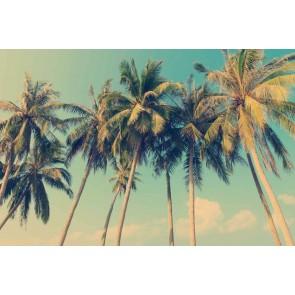 Vlies fotobehang Tropische palmbomen