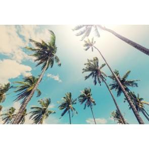 Vlies fotobehang Palmbomen aan het strand