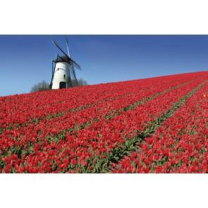 Vlies fotobehang Holland in bloei