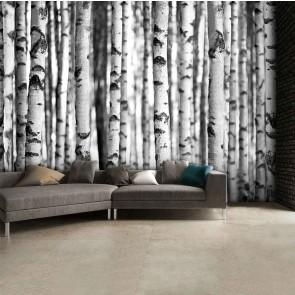 Fotobehang Berkenbomen zwart en wit